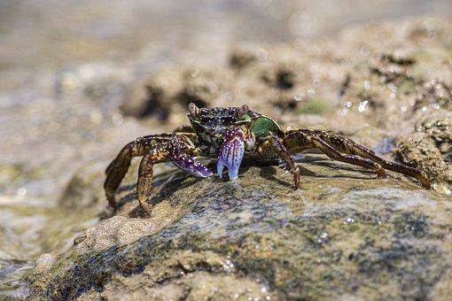 Thailand, Crab, Sea, Coastline, Pacific Ocean
