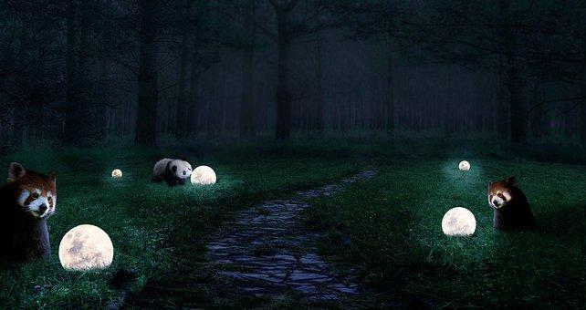 Fantasy, Panda, Moon, Forest, Green Field, Night Light