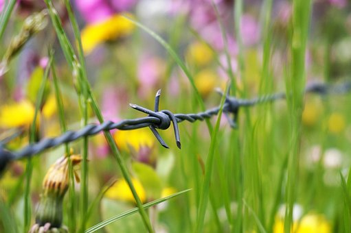 Easter, Spring, Barbed Wire, Pasture, Mountains, Alpine