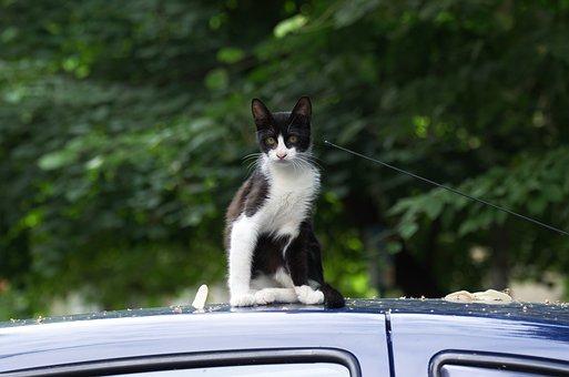 Cat, Pet, Feline, Fur, White, Black, On