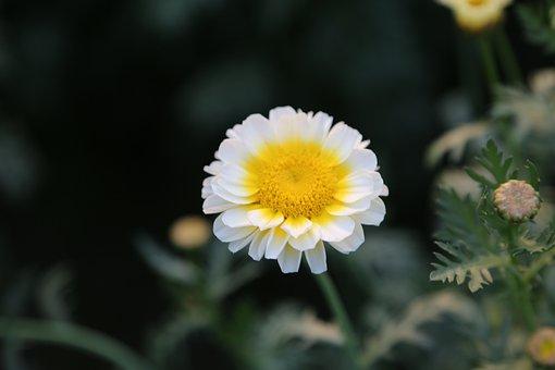 Flower, Sunflower, Red, Nature, Plant