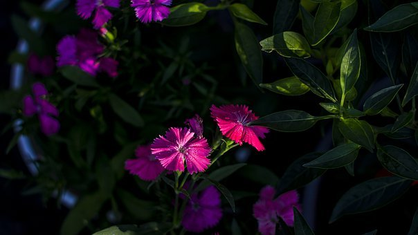 Purple, Dark, Texture, Night, Violet, Nature, Sky, Iris