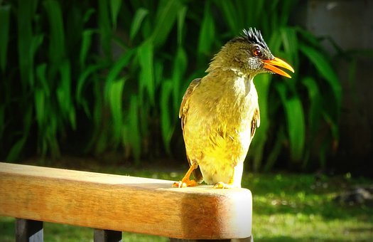 Bird, Sunbeam, Bill, Seychelles, Close Up, Plumage