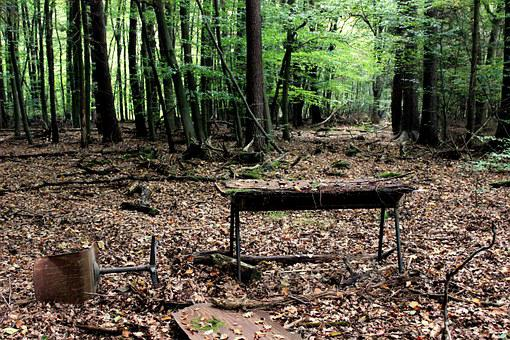 Forest Work Center, Desk, Office Chair, Forest