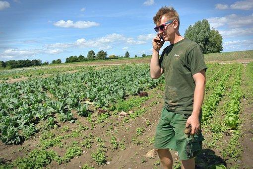 Farmer, Vegetables, Denmark, Organic, Ecology, Salad