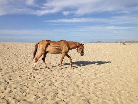 Neglected Horse, Beach Desert, Famine