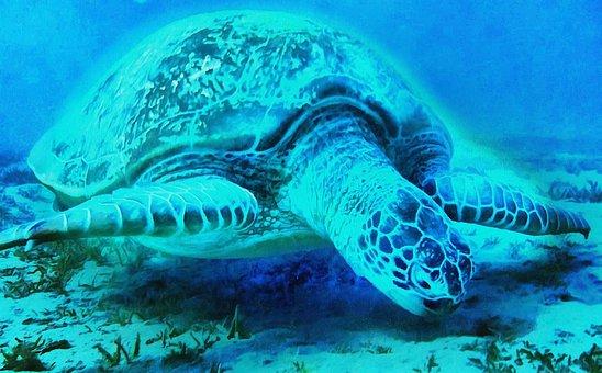 Turtle, Mar, Animals, Giant Tortoise, Tamar Project