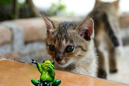 Cat, Lurking, Frog, Watch, Kitten, Mieze