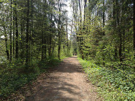 Forest, Away, Path, Nature, Forest Path, Hiking