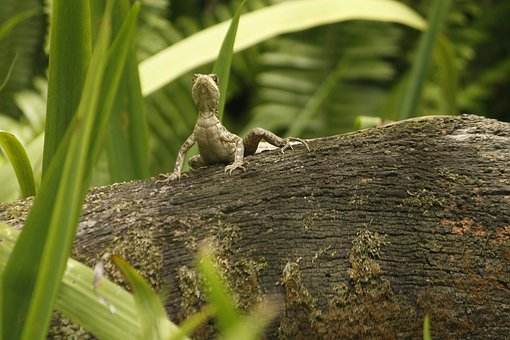 Lizard, Nature, Reptile, Green, Cold Blooded Animals