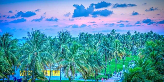 South Beach, Miami, Florida, Sunset, Palm Trees