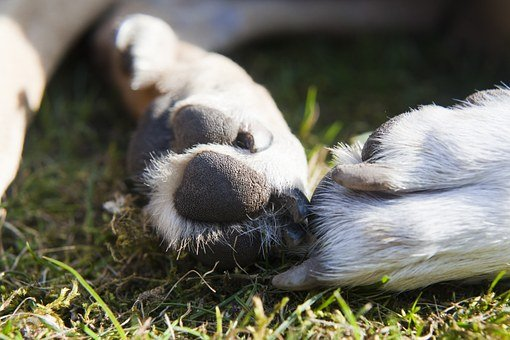 Paws, Dogs, Animal, Foot, Pet, Reprint, White, Cute