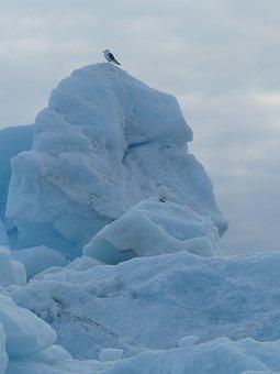 Arctic, Birds, Animal, Nature, Polar