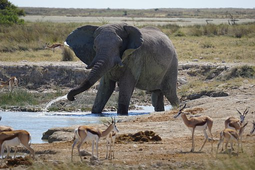 Namibia, Elephant, Big Five, Waterhole, Etosha