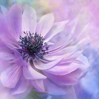 Nature, Landscape, Flower, Blossom, Bloom, Anemone
