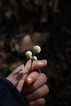 Sad, Alone, Plant, Garden, Nature, Flowers, Love