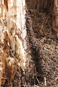 Ants, Nature, Insect, Summer, Forest, Thread, Macro