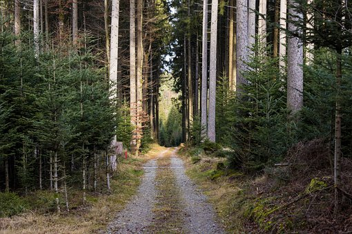 Forest Path, Trees, Away, Forest, Nature