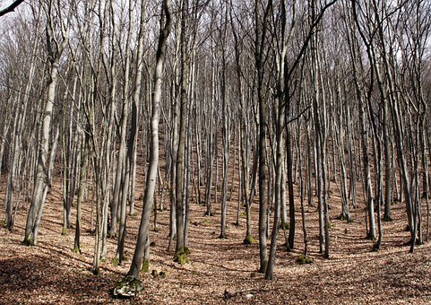 Book Hain, Forest, Trees, Tree Trunks