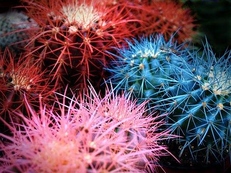 Cactus, Home, Green, Garden, Flora