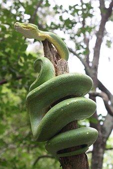 Green Tree Snake, Lizard, Snake, Leaves