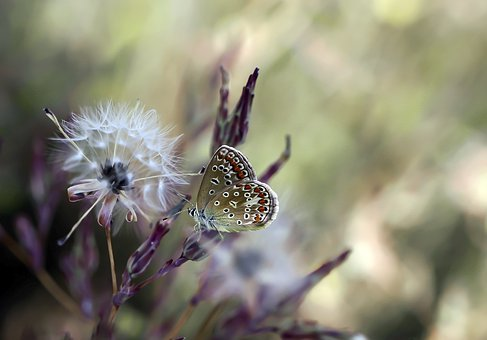 Butterfly, Insect, Wing, Nature, Animals