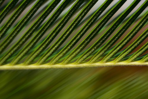 Texture, Green, Leaf, Leaves, Default