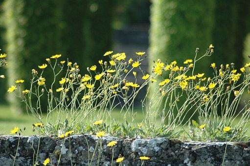 Yard, Leman, Lake, Flowers, Wind