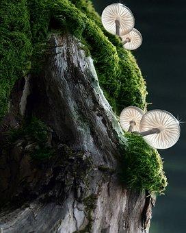 Fungi, Wood, Moss, Lichen, Mushrooms, Tree, Nature