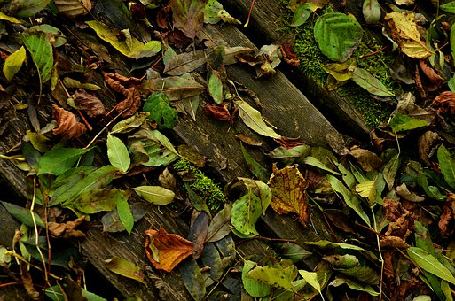 Leaves, Wood, Autumn, Moss, Forest, Nature, Green