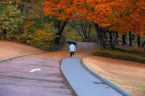 Old Woman, Leaves, Paths, Tree, Nature, Senior, Person
