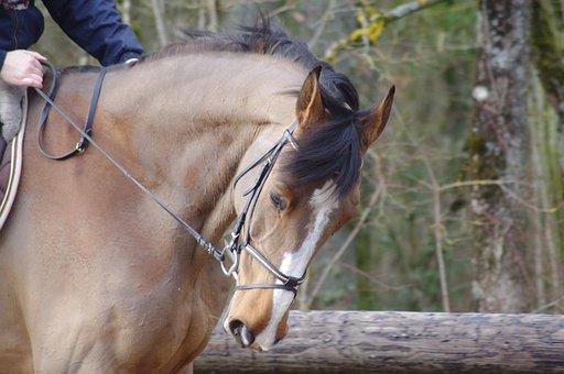 Horse, Competition, Horseback Riding, Sport, Equestrian