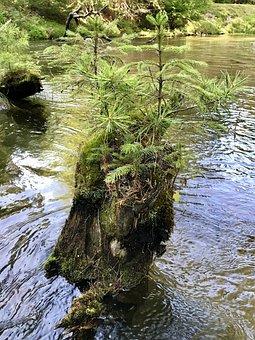 Tahquamenon River, Michigan, Plants