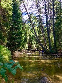Tahquamenon River, Michigan, Scenic, Water, Natural
