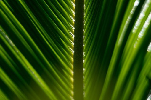 Texture, Green, Leaf, Leaves, Default, Tropical, Plant