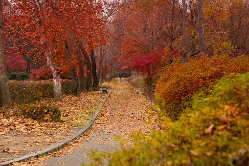 Paths, Walking, Lonely, Autumn, Leaves, Maple, Romantic