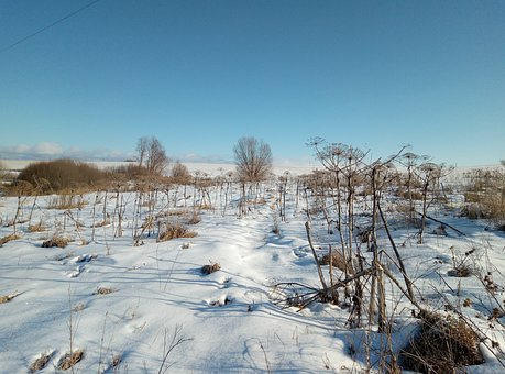 Field, Snow, The Bushes, Sky, Winter