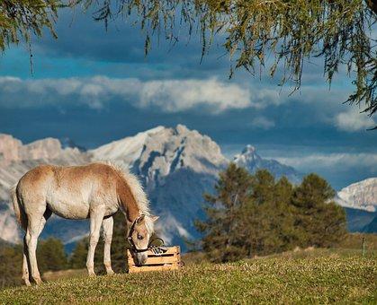 Seiser Alm, South Tyrol, Dolomites, Alm