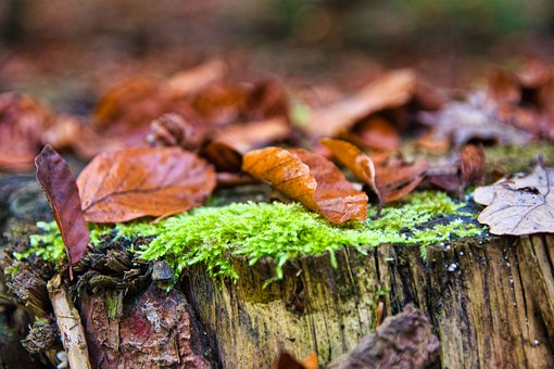 Autumn, Forest, Moss, Nature, Leaves
