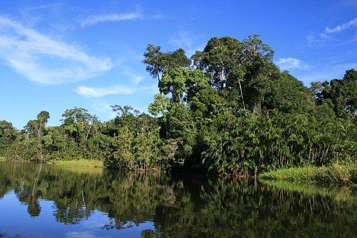 Ecuador, Jungle, Nature, Exotic, Fauna