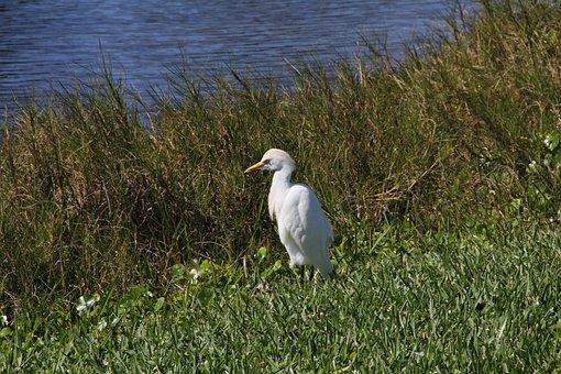 Bird, Water, Florida, Nature, Animal