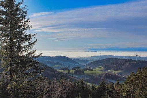 Landscape, Freiburg, Schwarzwald, Forest