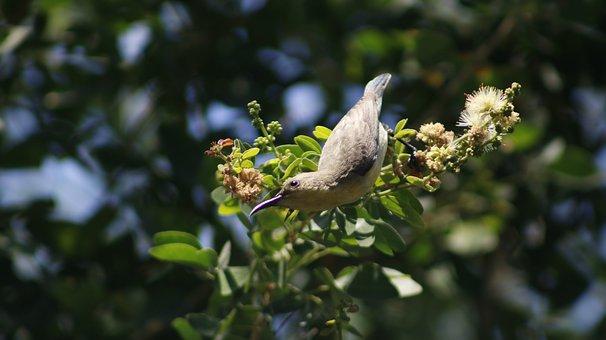 Nature, Animal, Spring, Hummingbird