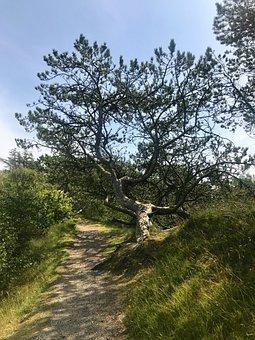 Pine, Tree, Landscape, Nature, Conifer, Evergreen, Log