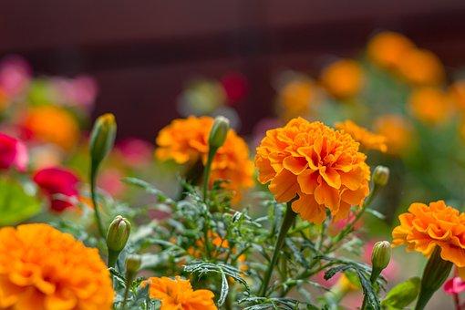 Flower, Love, Rosa, Red, Green, Color, Lived, Natural