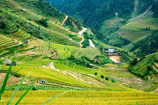 Mucangchai, Vietnam, Mountain, Rice