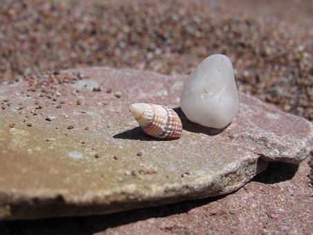 Seashell, Nature, Beach, Stone, Sea