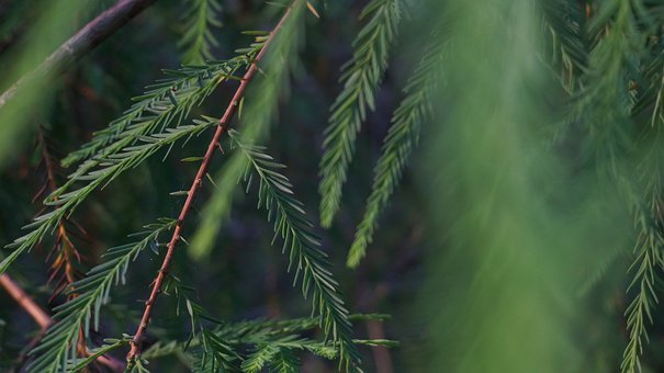 Green, Leaf, Leaves, Nature, Spring, Plants, Texture