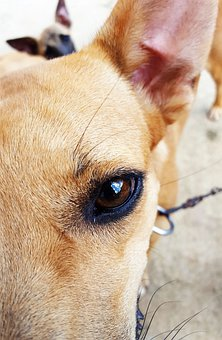 Dog, Animal, Pet, Pug, Adorable, Sad, Friendship, Puppy