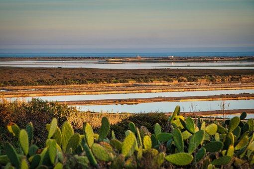 Lagoon Fuseta, Algarve, Saline